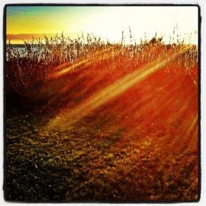 Sun Rays - like fingers of God